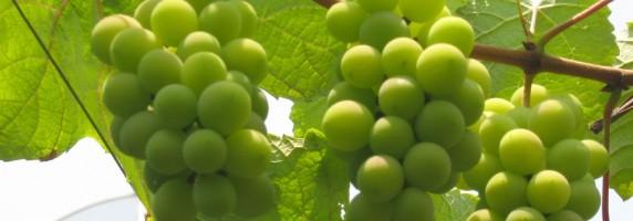 Turrones y Mazapanes- Uvas de la Suerte